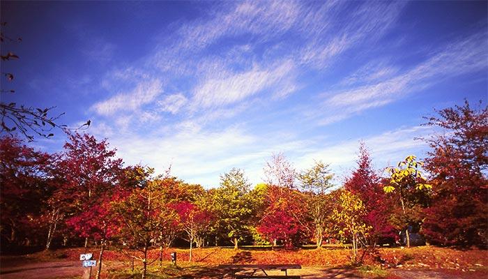 秋のスウィートグラス