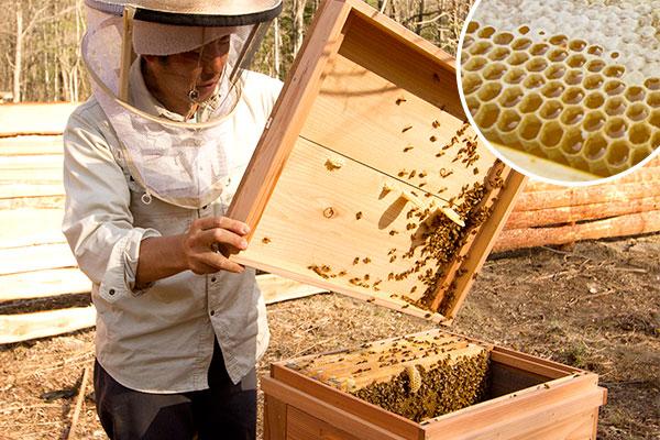 蜂蜜の日 特別イベント
