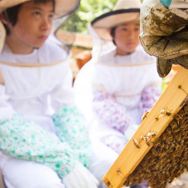 養蜂見学会
